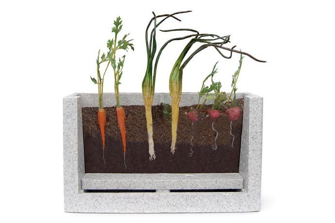transparent root vegetable garden