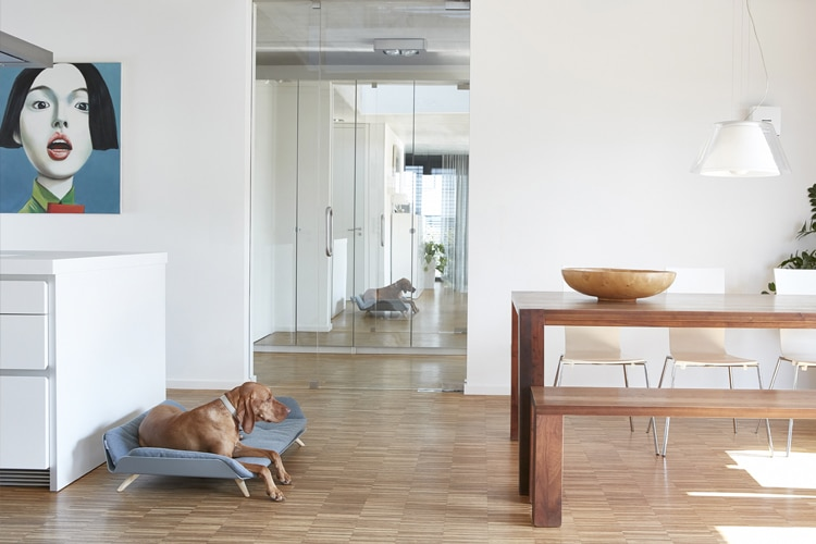 dog laying on letto daybed