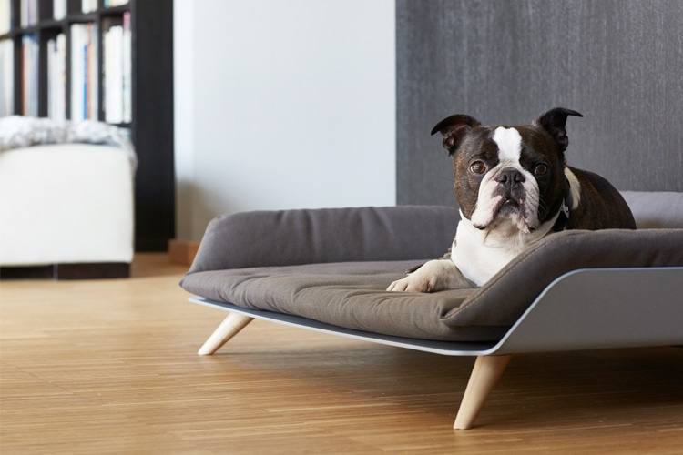 The Letto Daybed Is Designer Furniture For Your Dog