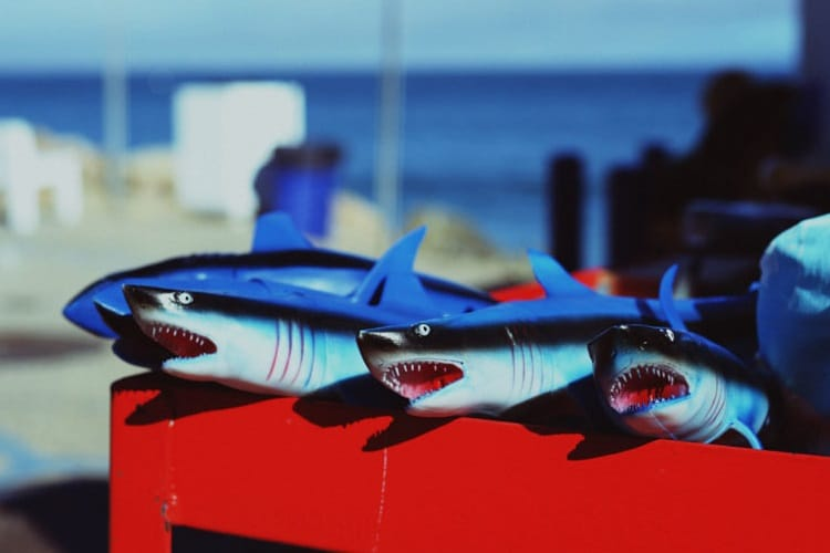 jemma baines shark