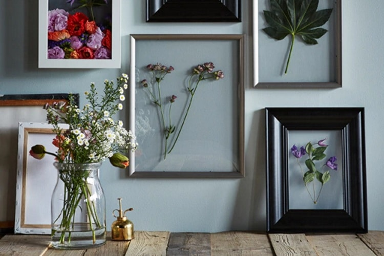 pressing plants between two glass frames for wall art