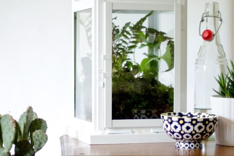 turn a lantern into a modern plant terrarium