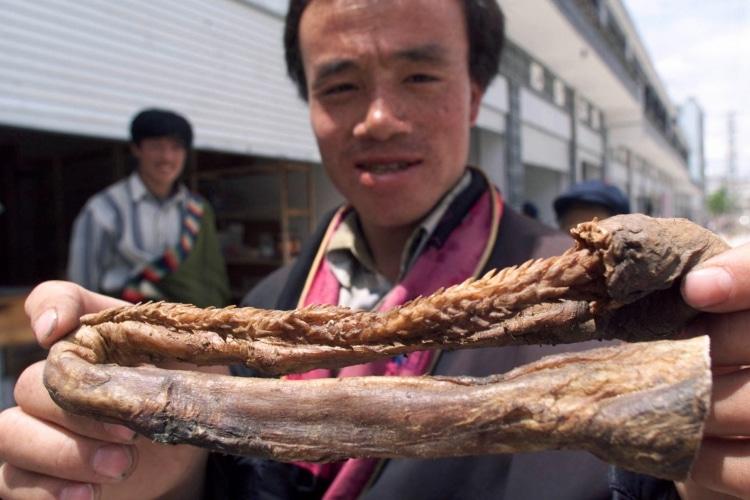 tiger penis