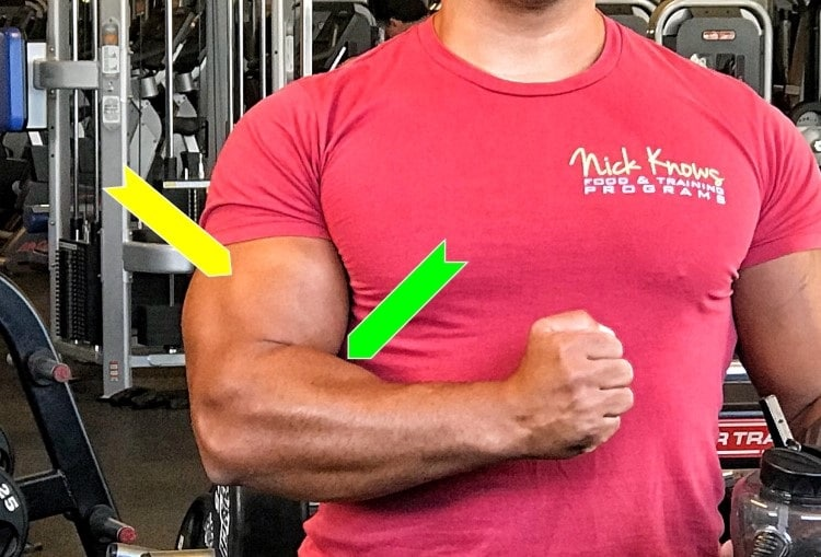 fists are closed condition of biceps
