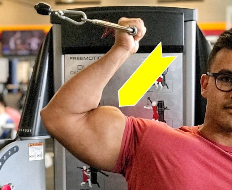 get the most out of the biceps