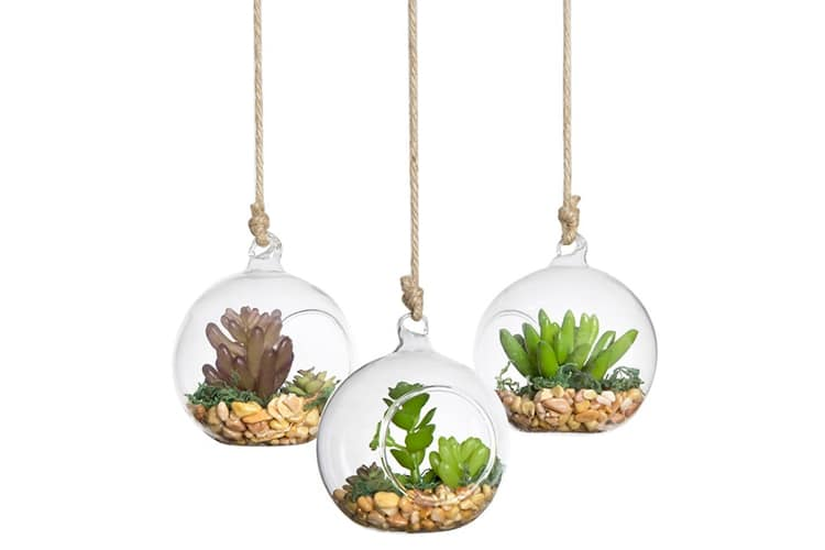 alternatives hanging terrarium