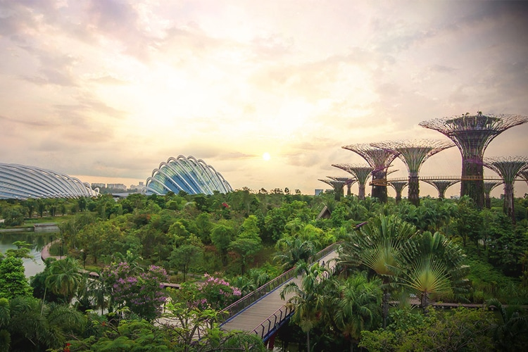 explore gardens by the bay