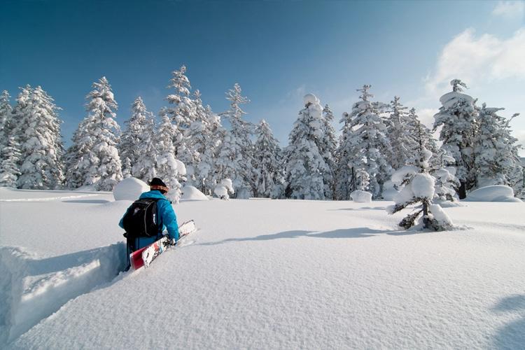 backcountry skiing through hokkaido japow