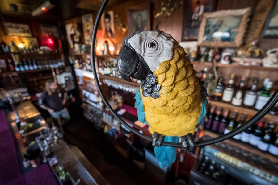 the standard parrot over the bar
