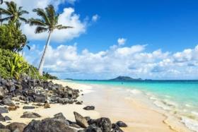 lanikai beach with palm trees honolulu