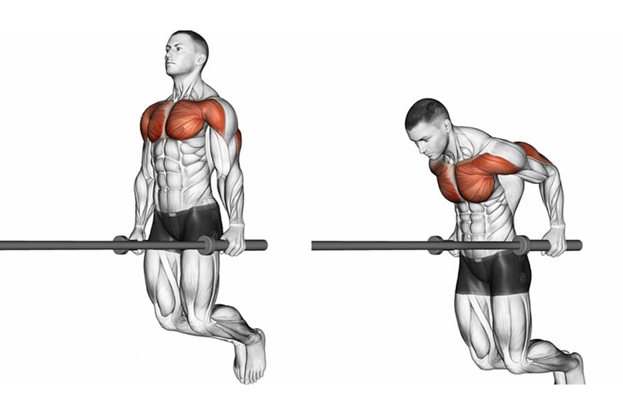 Dip for building chest muscles