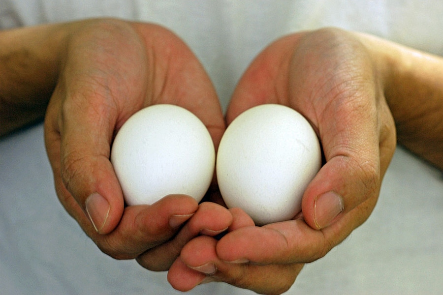 Hand Holding Eggs