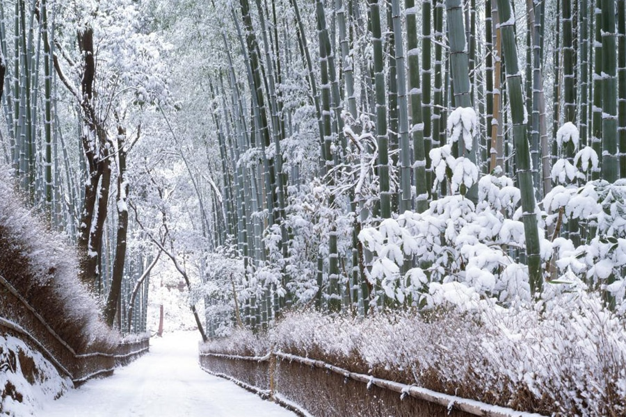 Bamboo Forest Snow