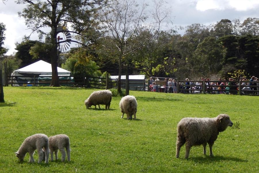 Collingwood Farm