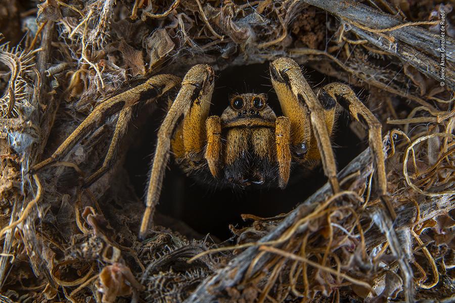 nat geo wildlife photographer