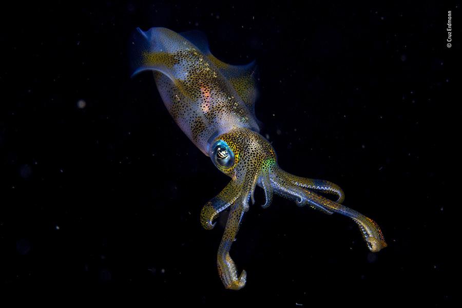 nat geo wildlife photographer squid