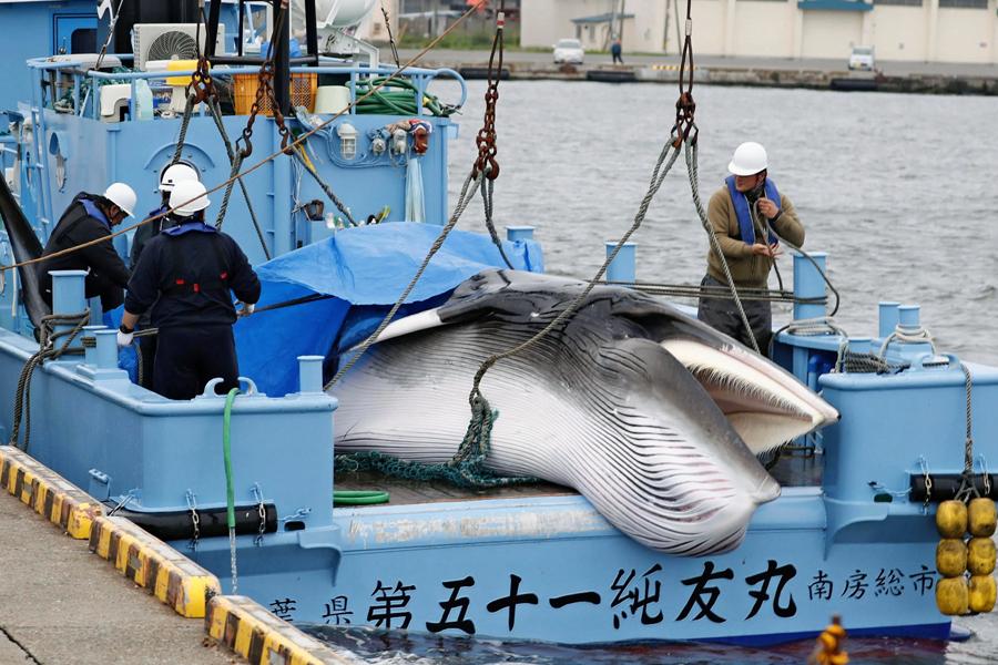 Whaling Japan
