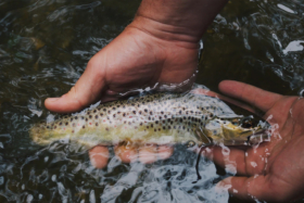 10 Best Fishing Spots in Melbourne & Victoria - Hands Holding Fish in Water