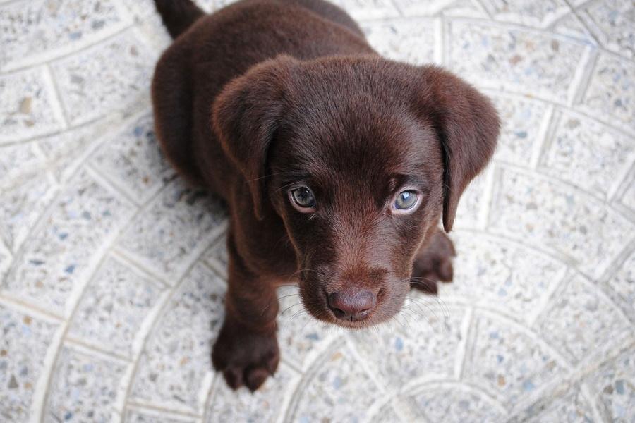 44 Best Dog Breeds For Apartment Living