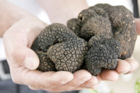 Pair of hands with truffles on palms