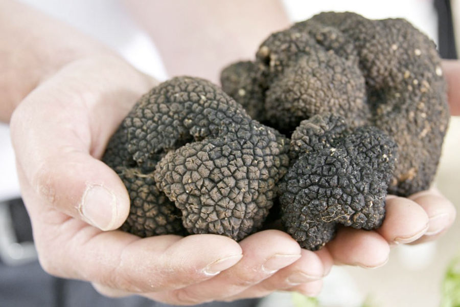 Everything You Need to Know About Truffles | Man of Many