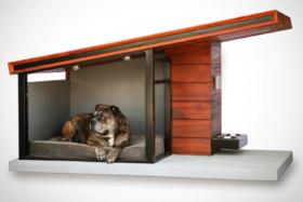 Dog relaxing in MDK9 Dog Haus