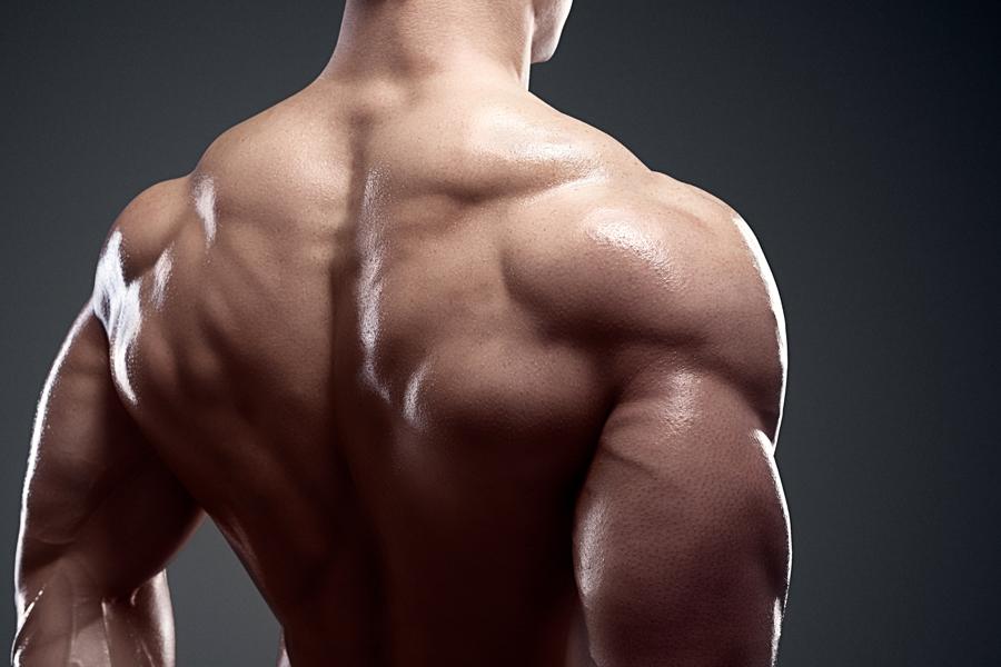 Back of a bodybuilder's shoulders