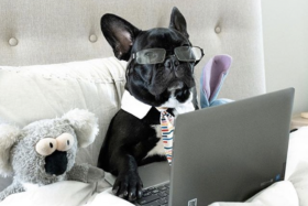 Feel-Good Friday - dogs working from home