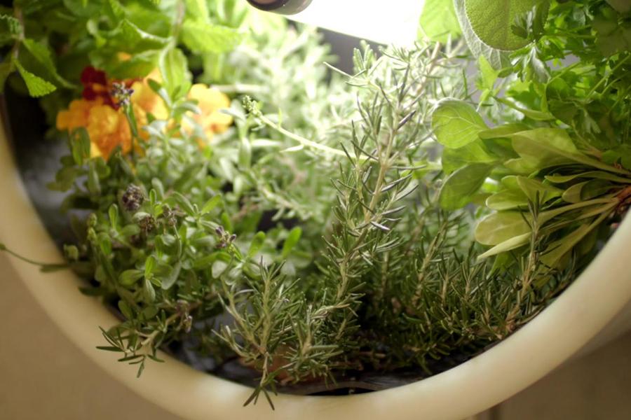 Indoor Garden varieties of plants