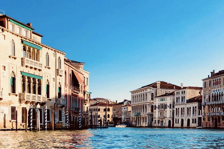 Venice dolphins 1