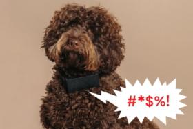 swearing dog collar