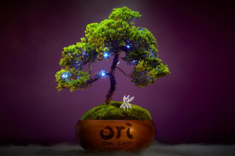win a bonsai tree