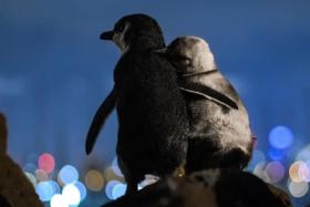 FGF - penguins
