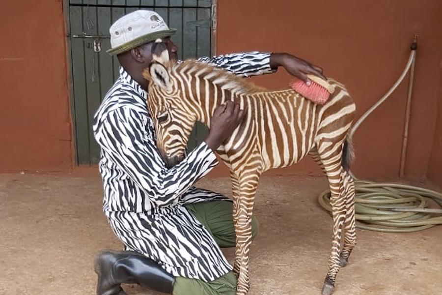 Feel-Good Friday - Zebra