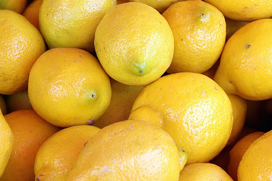 Simple Guide for lemon that Last the Longest