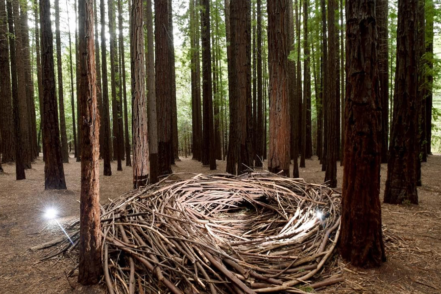 Canadian Redwoods Plantations