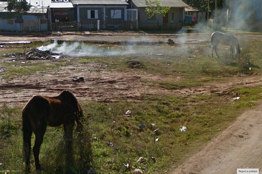 9-Eyes Blog empty lot where animal grazing