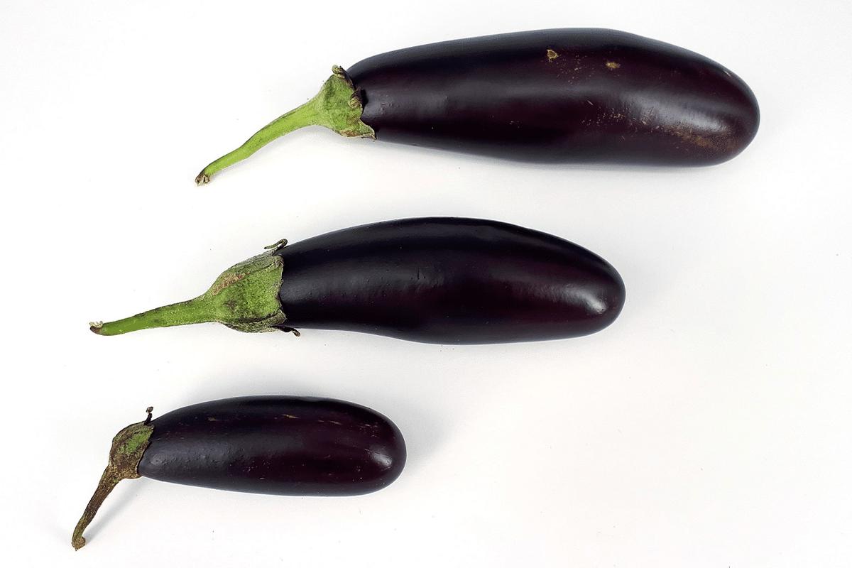 Average penis size australia 1