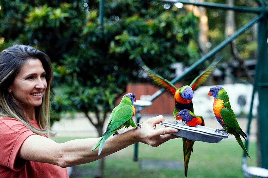 Best Theme Parks Gold Coast - Currumbin Wildlife Sanctuary