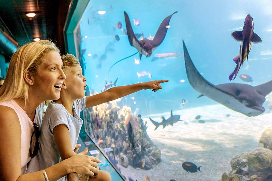 Best Theme Parks Gold Coast - Seaworld