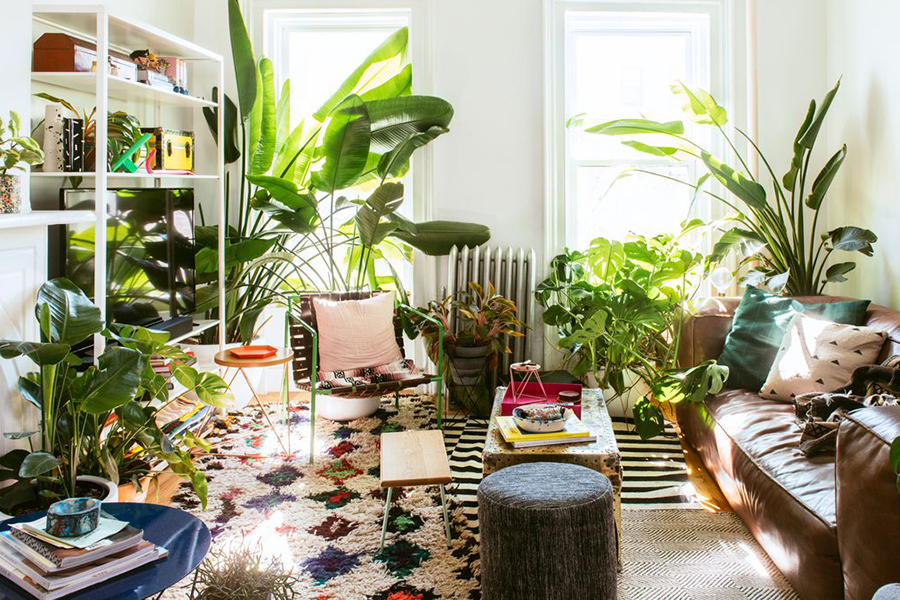 See what your room would look like full of plants! meeting area