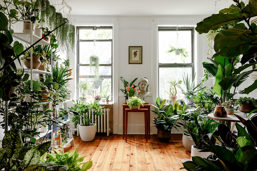 room full of plants