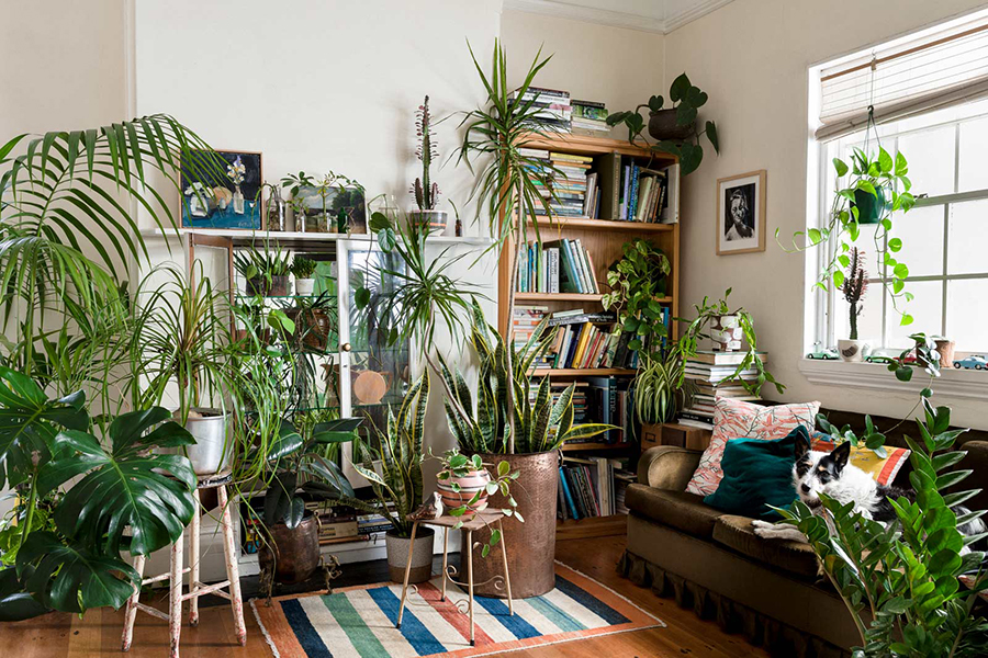 See what your room would look like full of plants!