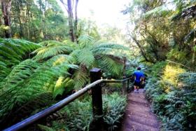 Walking Trail Ferny Creek - 1000 Steps Walk