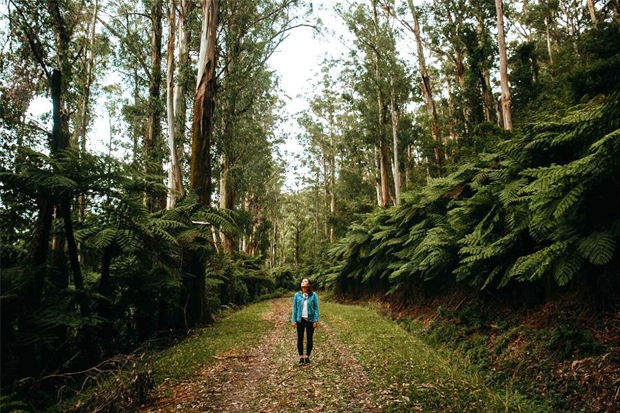 Walking Trail Warburton - Warburton Redwood Forest