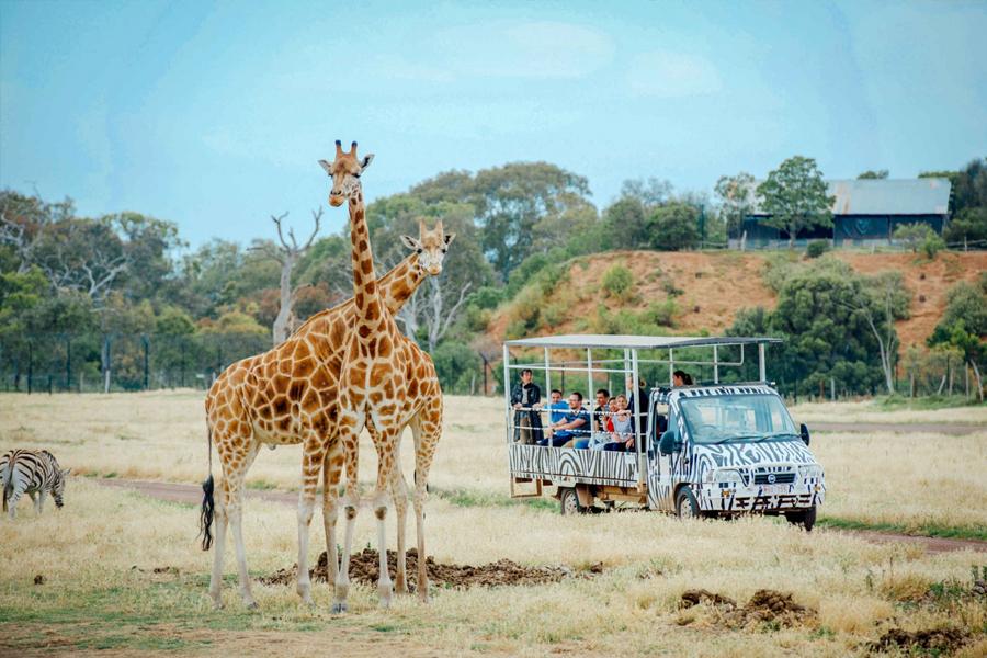 Werribee Open Zoo