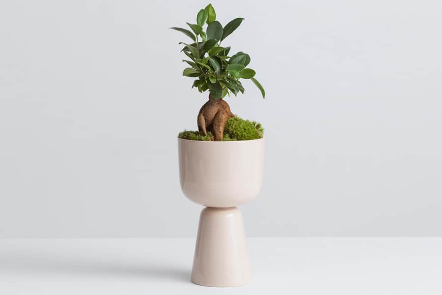 A white Nappula Pot with a plant