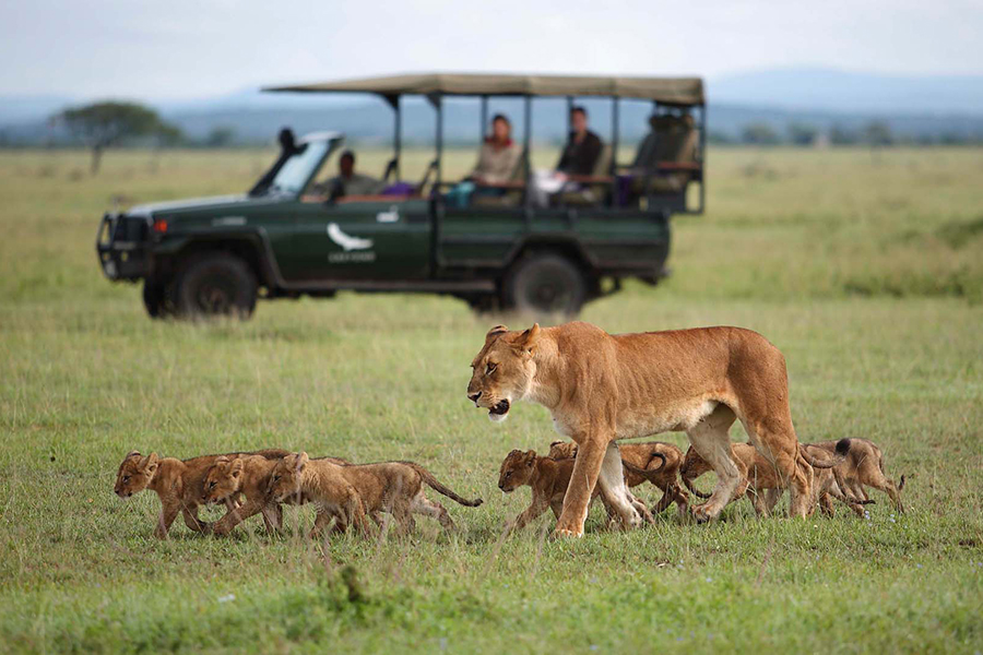 &Beyond Connect Virtual Safaris watching family of lions