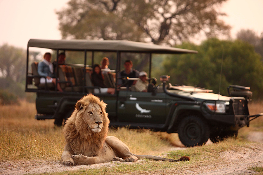 &Beyond Connect Virtual Safaris with lion relaxing