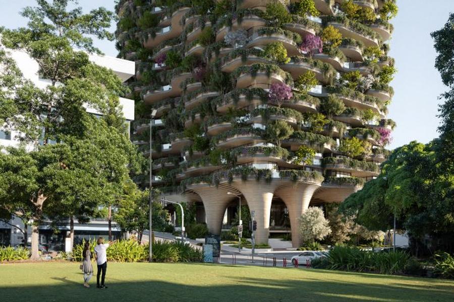 Brisbane Urban Forest 3